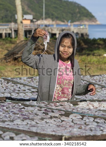 KOH PHANGAN, THAILAND - NOVEMBER 16, 2015 : Unknown Burmese woman lays squid drying in the fishing village. Fishing is main occupation and income source on the island - stock photo