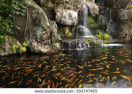 Koi Fish Pond Garden Waterfall Stock Photo 104747405 Shutterstock