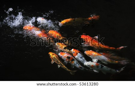 Pond waterfall stock images royalty free images vectors for Koi pond maker