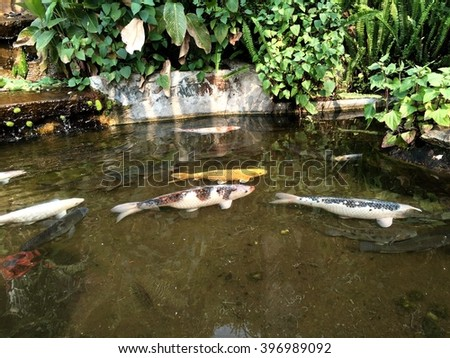 Fish pond stock images royalty free images vectors for Koi pond pool