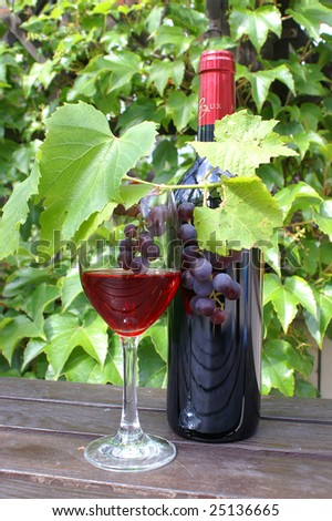 Kred grapes on the vine. Growing vine grapes - stock photo