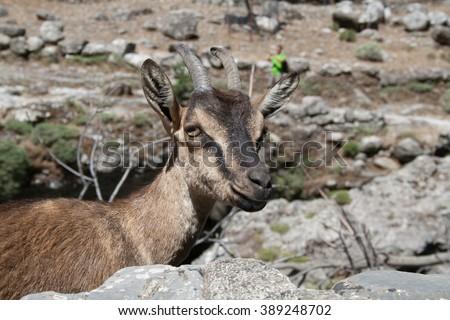 Kri-Kri in Samaria gorge, Crete, Greece - stock photo