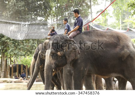 KUALA GANDAH, MALAYSIA - 2015 NOVEMBER 5 : Man ride a elephant in showing presentation.the Elephant Orphanage Sanctuary in Kuala Gandah, Malaysia. Baby elephant calf rescued after mother's death. - stock photo