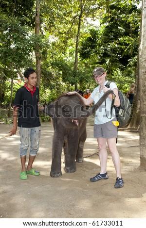 KUALA GANDAH, MALAYSIA - SEPTEMBER 25 : A visitor playing with Langsat at Kuala Gandah Elephant Orphanage Sanctuary during the Elephant Awareness Program September 25 2010 in Kuala Gandah, Malaysia. - stock photo