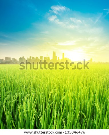 Kuala Lumpur is the capital city of Malaysia, landscape view over rice field plantation farming in morning sunrise - stock photo