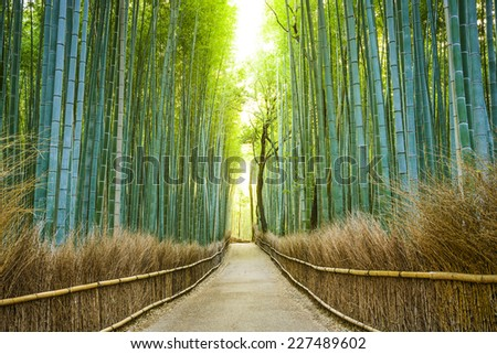 Kyoto, Japan bamboo forest. - stock photo