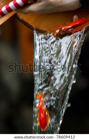 """KYOTO, JAPAN - JUNE 5:child fish on """"houjoue"""" event stands on the famous Shirakawa street in the Gion district on June 5: , 2011 in Kyoto, Japan. Maiko is the title given to an apprentice Geisha. - stock photo"""