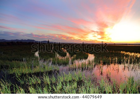 La Albufera, rice fields,Valencia province,Spain - stock photo