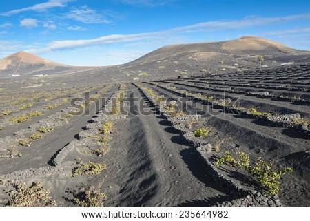 La Geria vineyard area in Lanzarote, Canary islands - stock photo