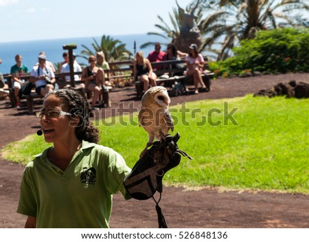 LA LAJITA, FUERTEVENTURA, SPAIN - SEPTEMBER 11, 2015:  Bird of Prey Show, Oasis Park, Fuerteventura, Canary Island, Spain