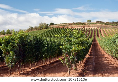 La Rioja is both a province and an autonomous region located in the North of Spain. - stock photo