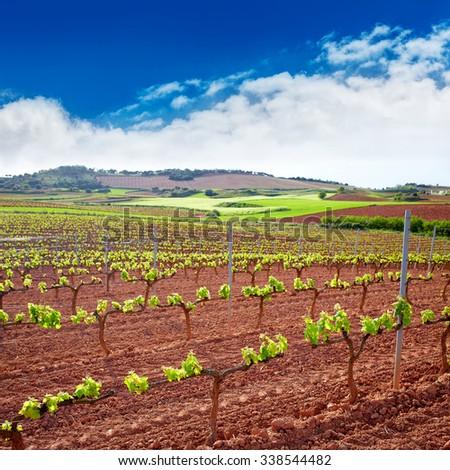 La Rioja vineyard fields by The Way of Saint James in Logrono - stock photo
