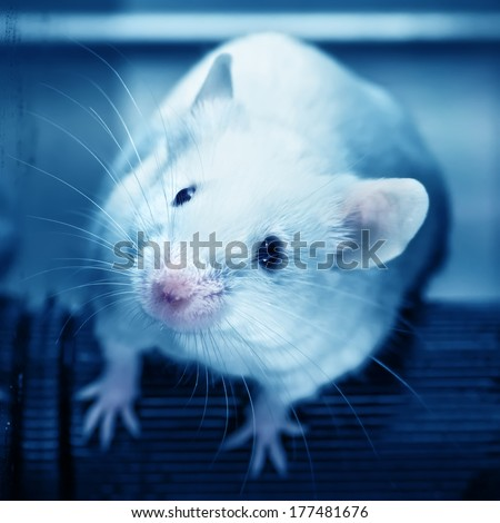 Laboratory mice  in the experiment test. Blue filte. - stock photo