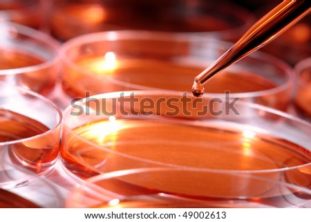 Laboratory pipette with drop of red liquid over Petri dishes filled with media solution for an experiment in a science research lab - stock photo