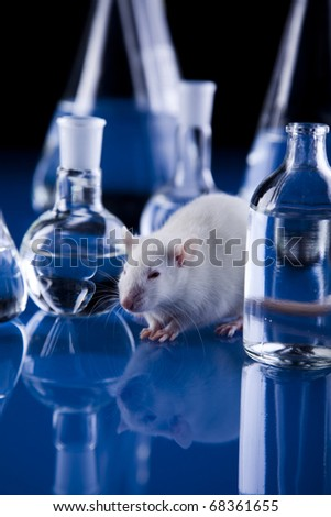 Laboratory rat - stock photo