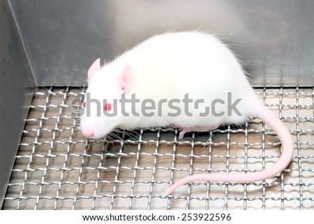Laboratory white mice with red eye in stainless steel cages. - stock photo