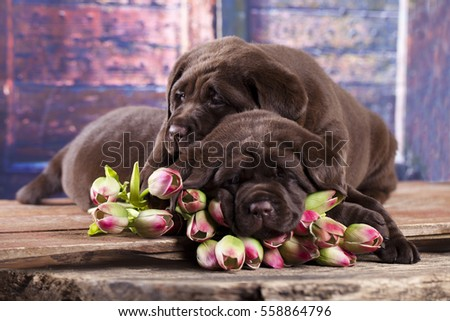 Labrador puppies sleeping