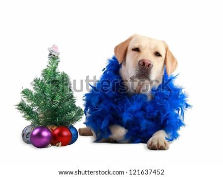 Labrador retriever laying by a small Christmas tree - stock photo