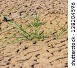 lack of water land, Dry land of Thailand. This is called Sam-Pan-Boke the interesting area.Dried earth because of rain dose not fall and the land lacked of water for agriculture.  - stock photo