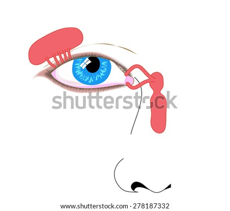 Lacrimal apparatus, tear duct and nasolacrimal duct. Created in Adobe Illustrator.  Contains transparencies.  EPS 10. - stock photo