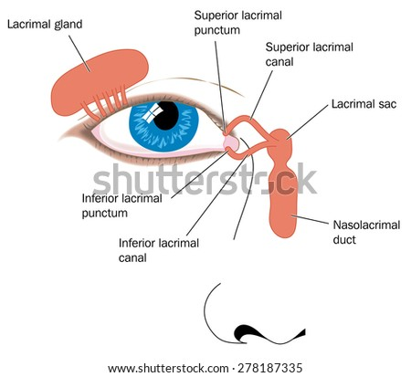 Lacrimal Apparatus Tear Duct Nasolacrimal Duct Stock Illustration ...