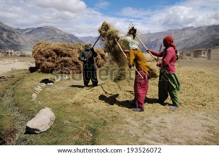 LADAKH, INDIA - SEPTEMBER 17: Unidentified women process cereal harvest in the wind during the harvest season on September 17, 2012. The majority of the local population are descendant of Tibetan. - stock photo