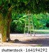 Ladder under a big tree. - stock photo