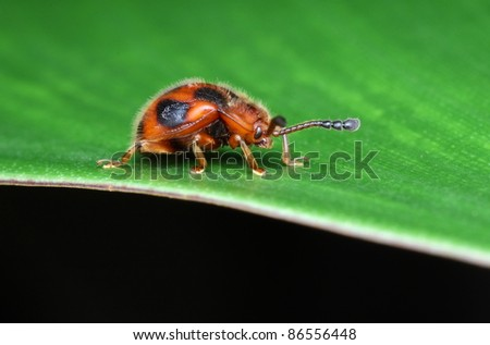 lady bird - stock photo