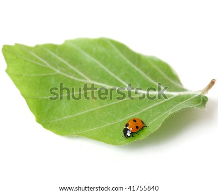 Lady bug on a leaf - stock photo