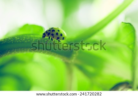 lady bug on a plant. nature and animals concept - stock photo