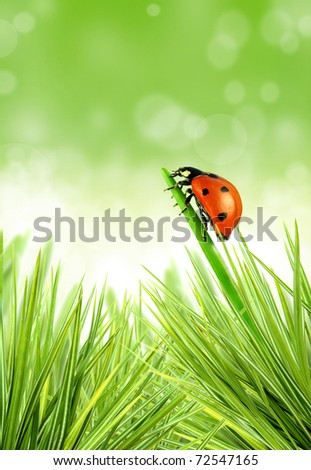 Lady-bug on stalk