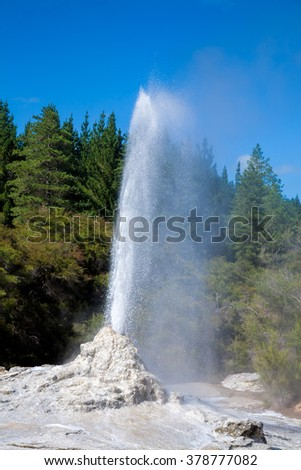 Lady Knox Geyser erupting at Wai-O-Tapu  geothermal area in New Zealand - stock photo