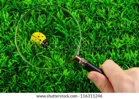 ladybird and magnifying glass in hand on green grass - stock photo