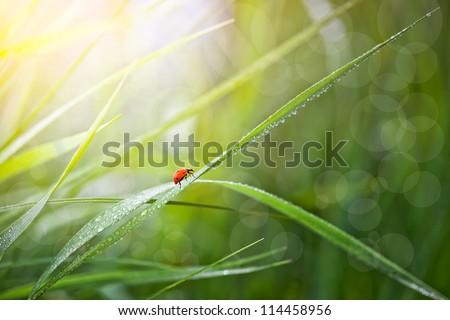 Ladybird on the green grass. - stock photo