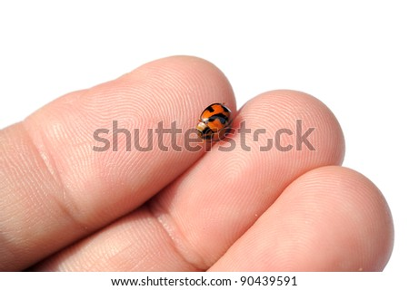 Ladybird sitting on finger isolated against white background, selective focus.