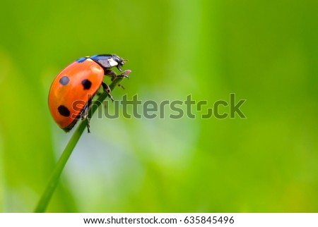 ladybug creeps on brightly green stalk, a green background