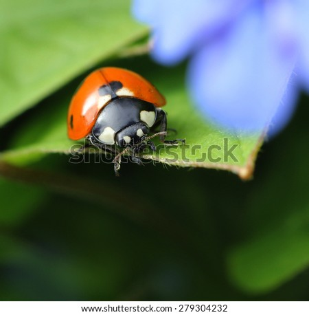 Ladybug in spring garden under blue flower - stock photo