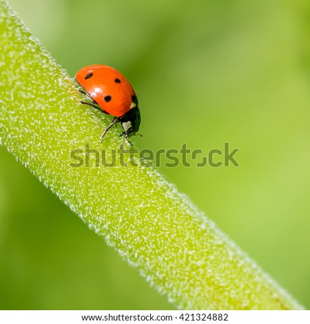 Ladybug, macro, detail - stock photo