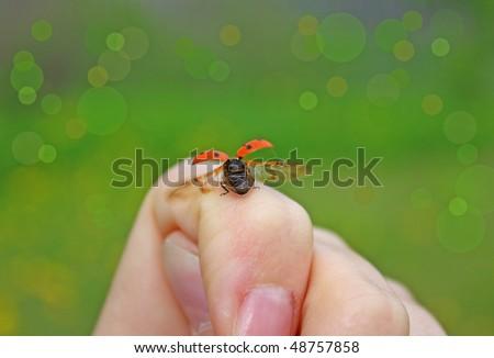Ladybug on a hand - stock photo