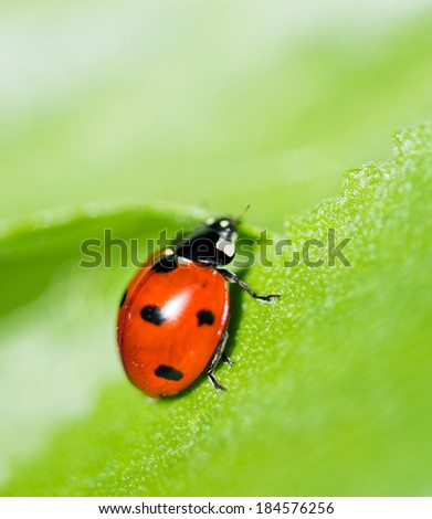 Ladybug on a leaf. Beautiful nature