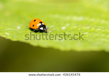 ladybug on a plant in the nature