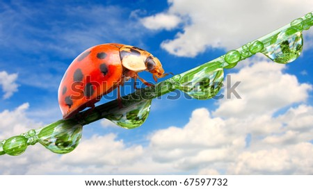 Ladybug on dewy grass against blue sky. Close up with shallow DOF. - stock photo