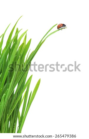 Ladybug on fresh green leaf isolated on white background. Spring background - stock photo