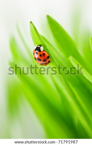ladybug on green grass close up - stock photo