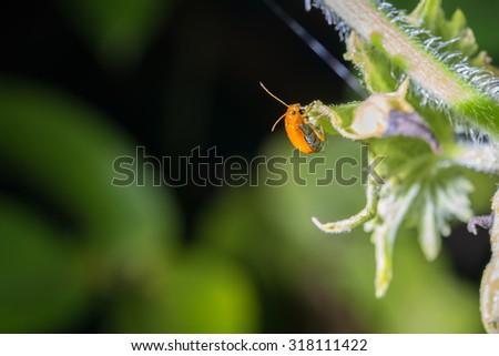 Ladybug on green leaf and green background - stock photo