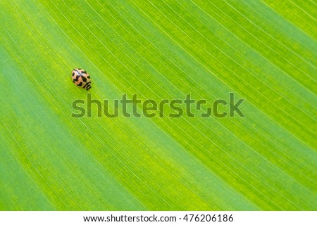 ladybug on green leaf background