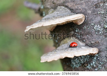 Ladybug on tree bark mushroom - stock photo
