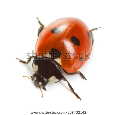 Ladybug on white background - stock photo