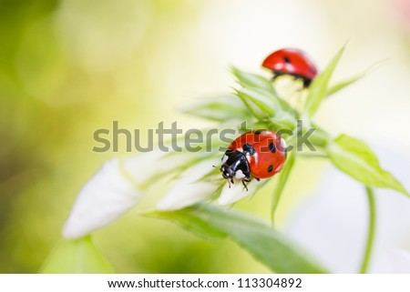 Ladybug resting on flower, early evening sunlight and bright colors - stock photo
