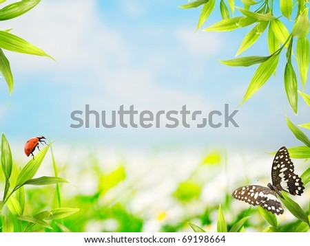 Ladybug sitting on bamboo leaves - stock photo